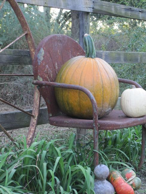 Pumpkin in old metal garden chair